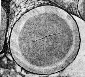 Виды трещин у дерева