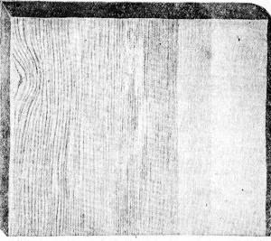 Рис. 58. Ситовина (слабо выраженная) от грибка Траметес Пини.