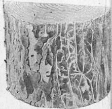 Вредители деревьев короед, червоточины